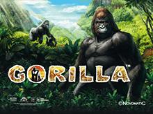 Автомат Gorilla в Вулкане Удачи