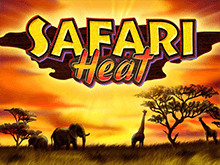 Автомат Safari Heat на деньги